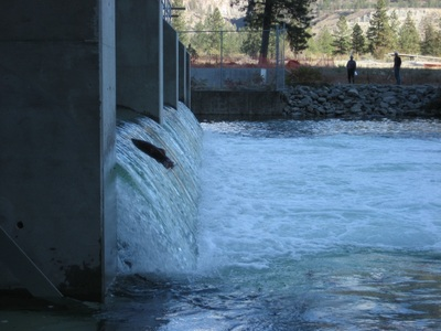Gallery for Dam fish count